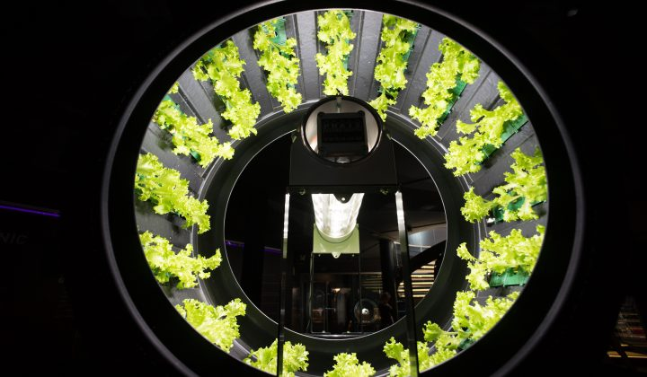 Expo 2015 – Belgium Hydroponic Growing System