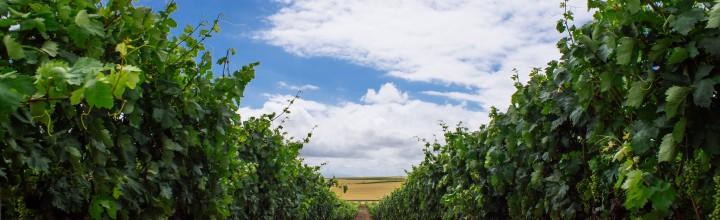 Haro – Rioja