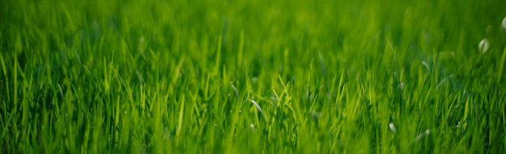 Planar Green